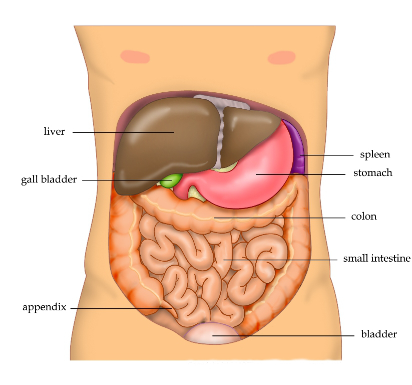 List of effects about chi nei tsang abdominal thai healing massage view larger image ccuart Gallery